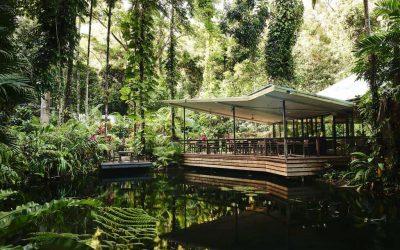 Daintree Eco Lodge 03
