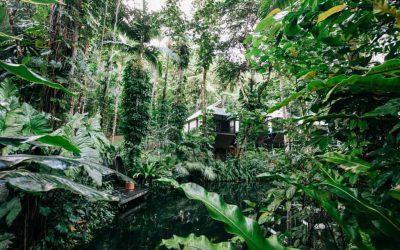 Daintree Eco Lodge 13