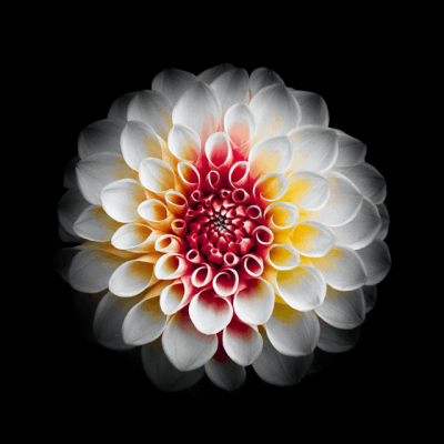 Flowers-14-1.png