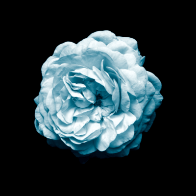 Flowers-16-1.png