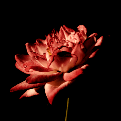 Flowers-9-1.png